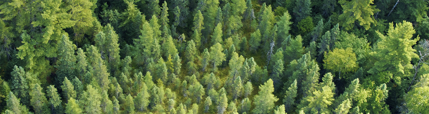 Canadian Sustainable Forests